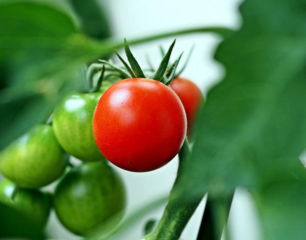 Tomate inmal anders? Als Suppe mit Mango schmeckt Sie herrlich fruchtig.  ©luise / PIXELIO