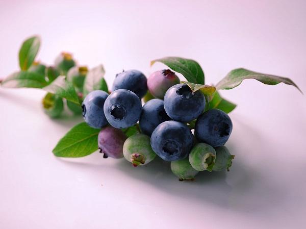 Heidelbeeren eignen sich ideal für die Speiseeis-Zubereitung.  ©gänseblümchen / PIXELIO