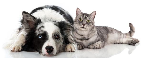 Diabetes bei Haustieren